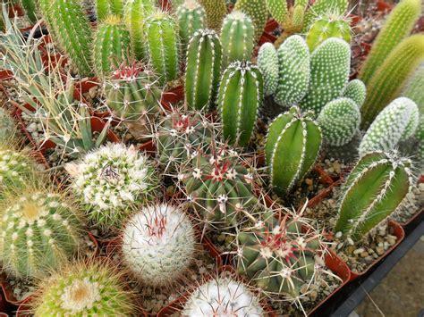 Succulents Plants Sydney: Add a Unique Touch to Your ...