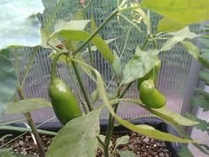 Pflanzen Im Juli : pflanzen am 17 juli stephan senfberg aquaponik ~ Orissabook.com Haus und Dekorationen