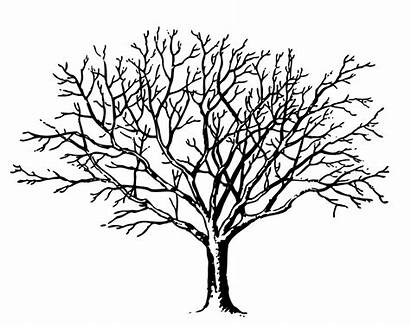Tree Spooky Ivey Clip Clipart Vector Clker