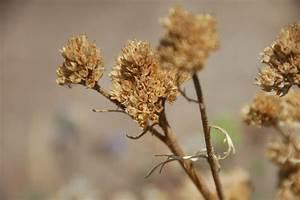 Wildflowering L A