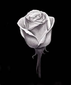 Charcoal Rose Drawing