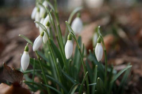 Lebewohl, Winter! Gartenarbeit Im Februar