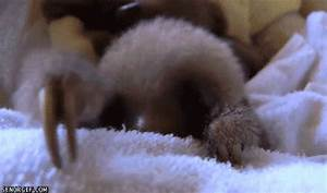 Baby Sloth GIF - Find & Share on GIPHY