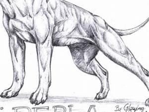 Perla the Pitbull drawing - YouTube