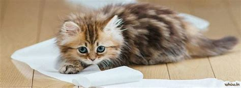 Cute Cat Kitten Facebook Cover #4