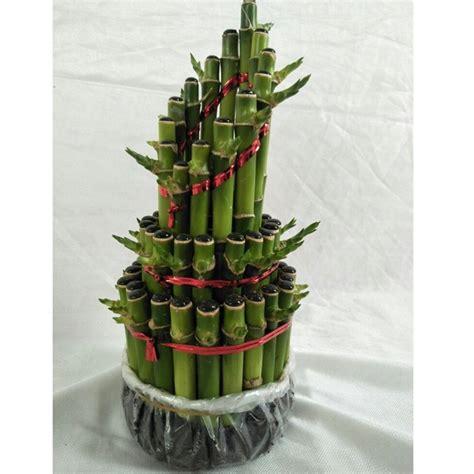 tanaman bambu hoki runcing bibitbungacom