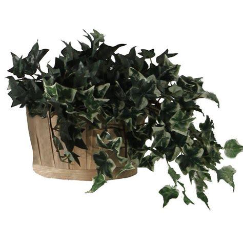 plante lierre vert panache en pot h20cm inspirez vous id 233 es d am 233 nagement agencement