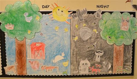 Day Night Sorting Mat For Nocturnal Animal Sorting