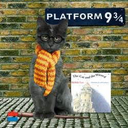 harry potter cat harry potter cat and cat in costume