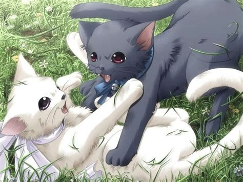 anime cat anime animal images cats hd wallpaper and background