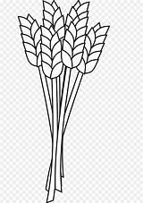 Wheat Coloring Clip Grain Flour Whole Barley Bar sketch template