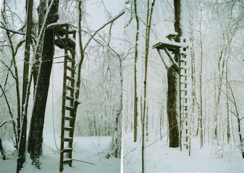 Best 25+ Ladder Tree Stands Ideas On Pinterest