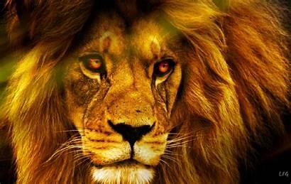 Jungle King Animal Lion Wildlife Wallpapers Animals