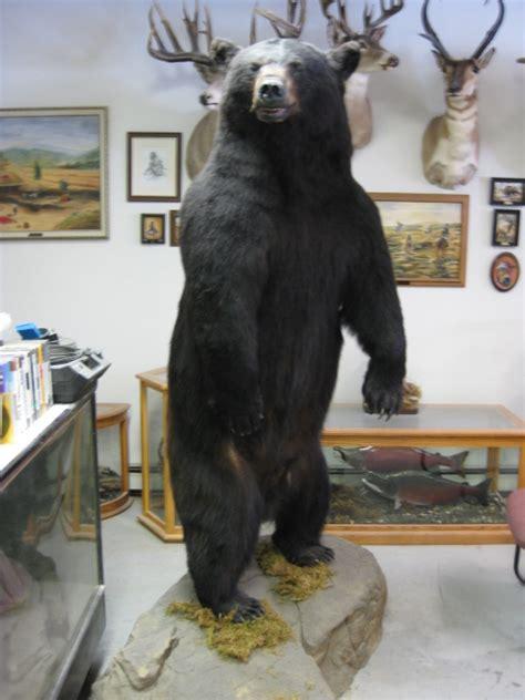big game lifesize alaska wilderness arts  taxidermy