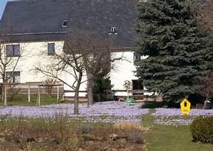 Wann Blühen Krokusse : das hellviolett der krokusse auf den wiesen 2009 in drebach ~ Eleganceandgraceweddings.com Haus und Dekorationen