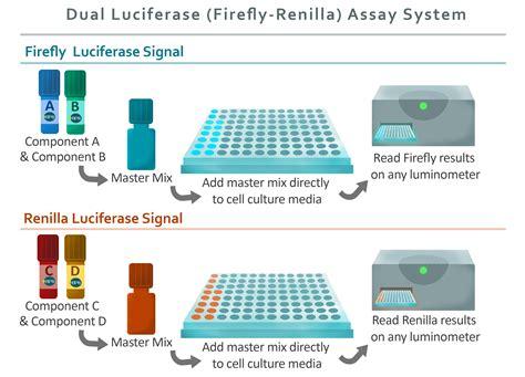 Dual Luciferase (Firefly-Renilla) Assay System