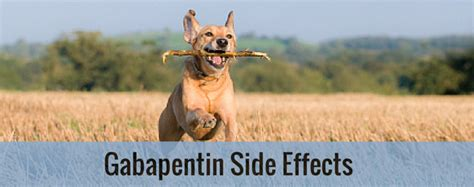 gabapentin side effects entirelypets