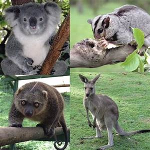 Opinions on Marsupial