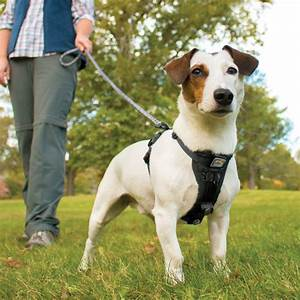 Your Guide To The Best No Pull Dog Harness In 2018