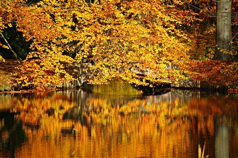 stock photo  autumn autumn colours bridge