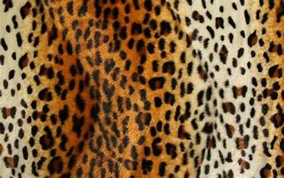 Desktop Hoodie Mens Cheetah 2xl 3xl Animal