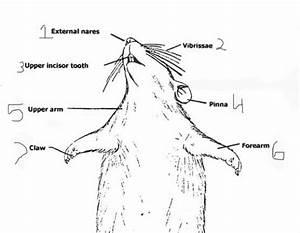 External Body