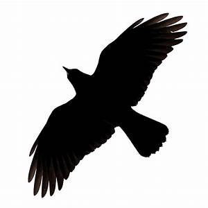 Raven Flying Clipart