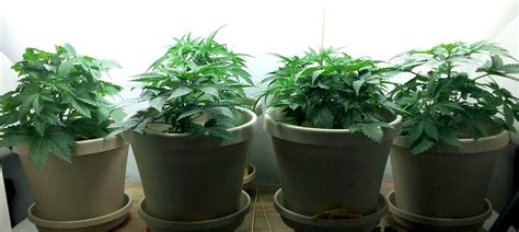 5 Secrets To Controlling Heat When Growing Cannabis