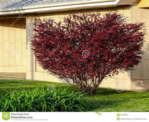 strauch mit roten bl 228 ttern stockfoto bild 51649230