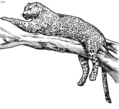 leopard coloring pages    print
