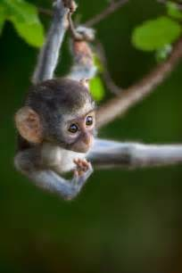 Baby Monkey Hanging From Tree