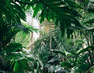 Plantes Exotiques Rustiques : 10 plantes exotiques et rustiques pour jardin jungle ~ Melissatoandfro.com Idées de Décoration