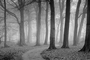 The Winding Path Black & White wall mural, Pre pasted ...