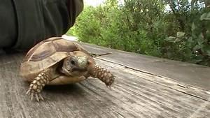 babyschildkröte in