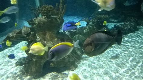 sea aquarium marne la vallee aquarium sea picture of aquarium sea val d europe marne la vallee tripadvisor