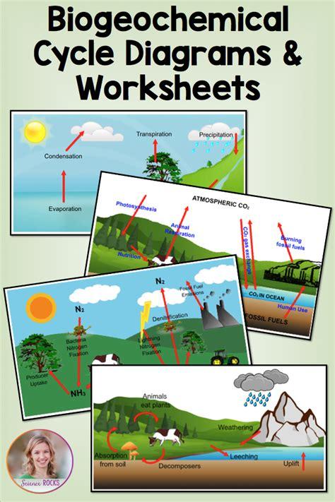 Is the final aspect of the nitrogen cycle. Biogeochemical Cycles Worksheet Answer Key - worksheet