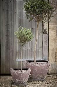 Planter Un Olivier En Pleine Terre : design exterieur comment planter olivier pot terre cuite ~ Farleysfitness.com Idées de Décoration