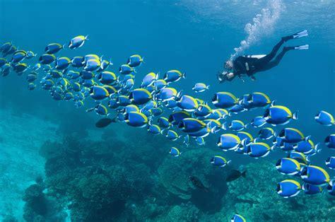 worlds  scuba diving destinations