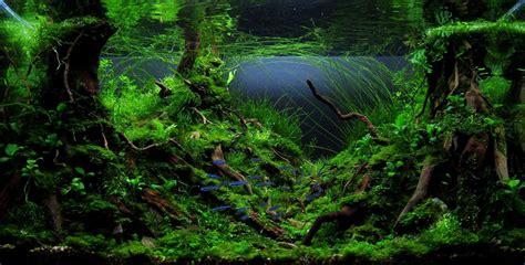 nature aquascape nature style aquarium a mossy for me but i