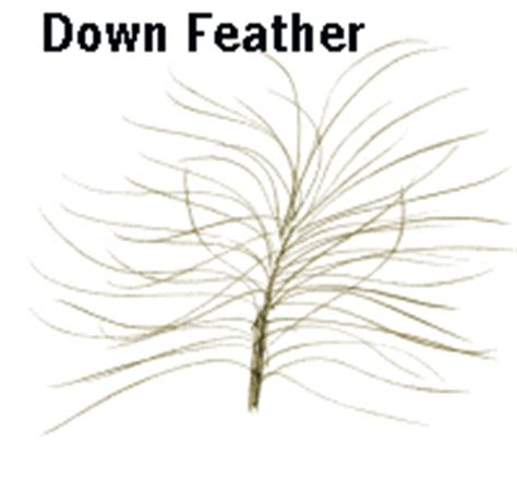 earthlife web  birds feather
