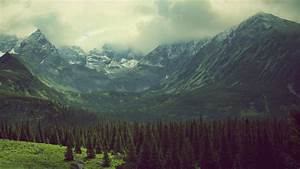 Mountain, Valley, Pine, Trees, Landscape, Wallpapers, Hd, Desktop, And, Mobile, Backgrounds
