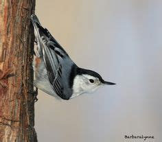 1000 images about birds i ve seen in my yard on pinterest