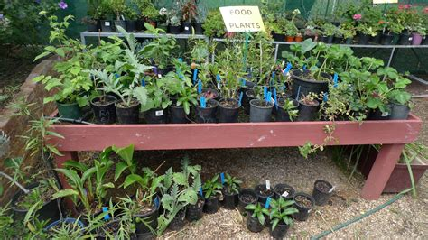 starting a veggie patch starting a new veggie patch with watermelon seedlings eat code see