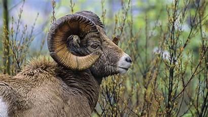 Wildlife African Wild Animals Wallpapers Desktop Animal