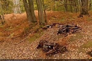 Carcasse De Voiture : que de d chets dans nos paysages photo le blog ~ Melissatoandfro.com Idées de Décoration