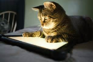 apps for cats seven apps for playful cats pcworld