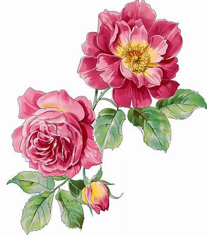 Flowers Floral Watercolor Flower Botanical Rose Clipart