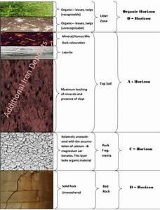 Roots  U0026 39 N U0026 39  Shoots  Soil  Profiles  U0026 Maintenance