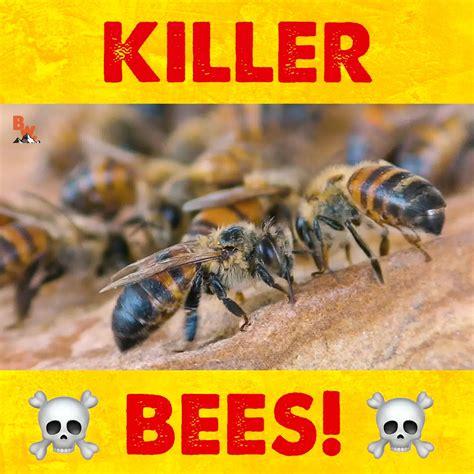 Coyote Peterson - KILLER BEES! | Facebook