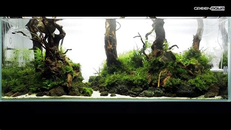 Aquascape Forest by 240l Forest Aquascape Featuring Twinstar Nano